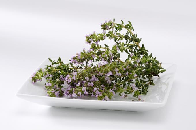 Kakukkfű  Thymus vulgaris. Természetgyógyászat gyógynövény